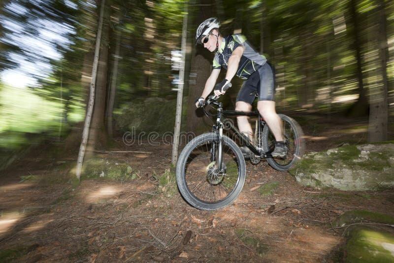 Bos fiets royalty-vrije stock foto