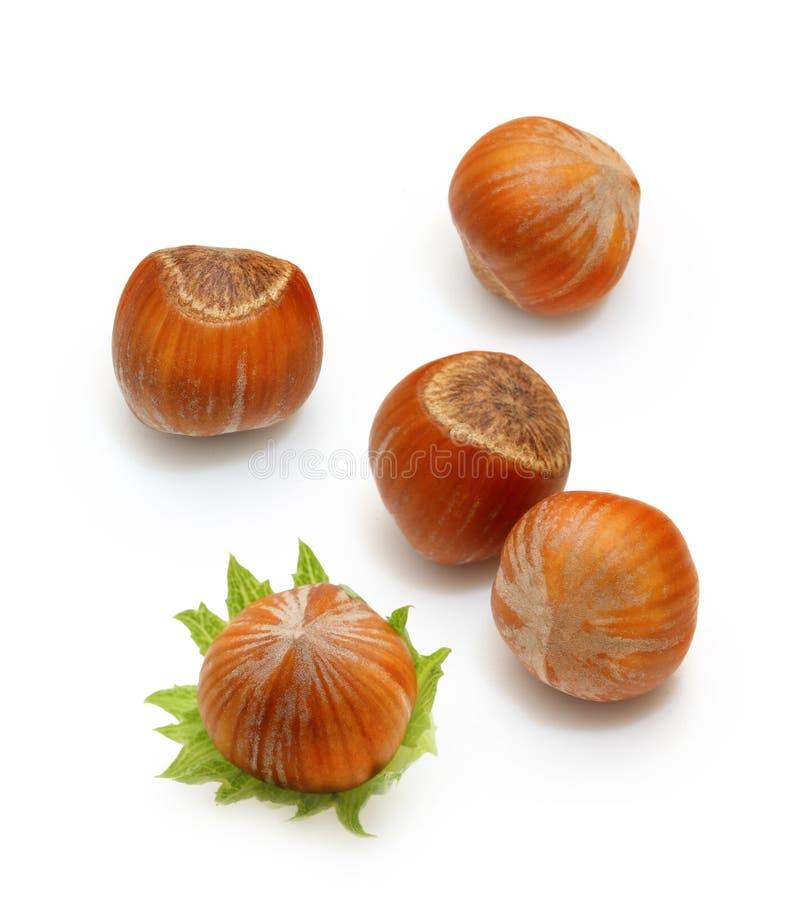 Bos ge?soleerde notenhazelnoten stock afbeeldingen
