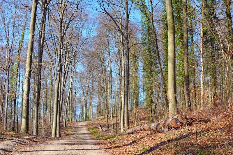 Bos geroepen 'Odenwald 'in Heidelberg in Duitsland op een zonnige vroege de lentedag royalty-vrije stock afbeeldingen