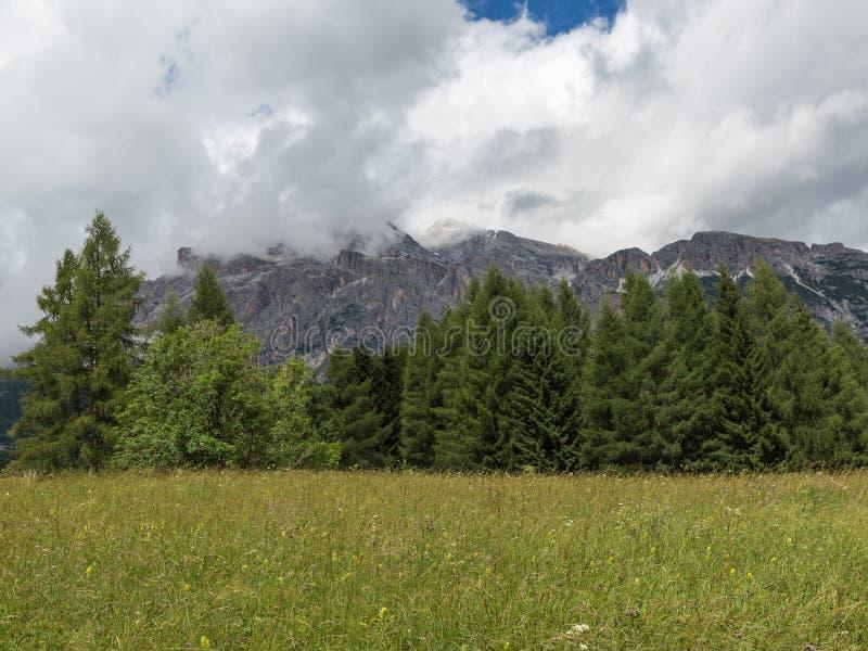 Bos: Groep Groene Sparren in de Zomertijd en Piek van Italiaanse Dolomietalpen met Wolken op Achtergrond royalty-vrije stock foto's