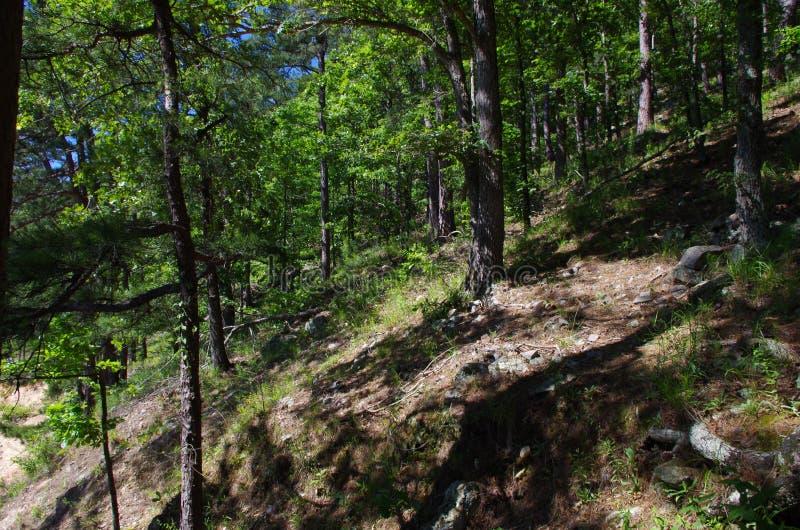 Bos in Heet de Lentes Nationaal Park, Arkansas, de V.S. royalty-vrije stock afbeeldingen