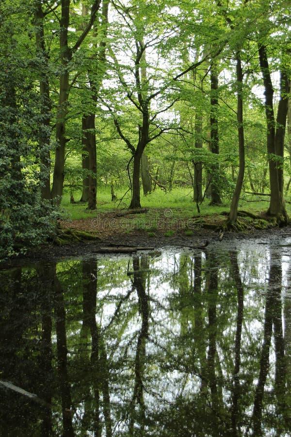 Bos in het Engelse platteland royalty-vrije stock afbeeldingen