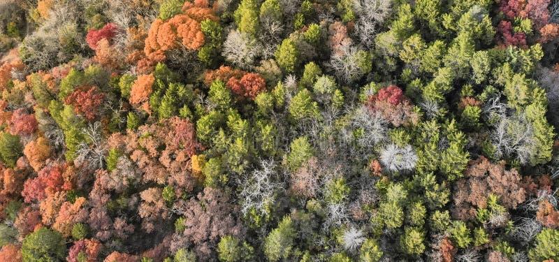 Bos het gebladertelandschap van de panorama kleurrijk herfst in Dalla royalty-vrije stock foto's