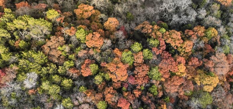 Bos het gebladertelandschap van de panorama kleurrijk herfst in Dalla royalty-vrije stock afbeeldingen
