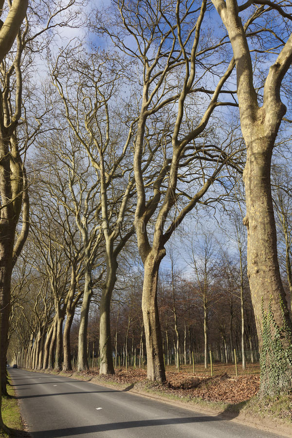 Bos in het kasteel van vaux-le stock foto