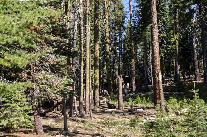 Bos in het Nationale Park van Yosemite royalty-vrije stock foto