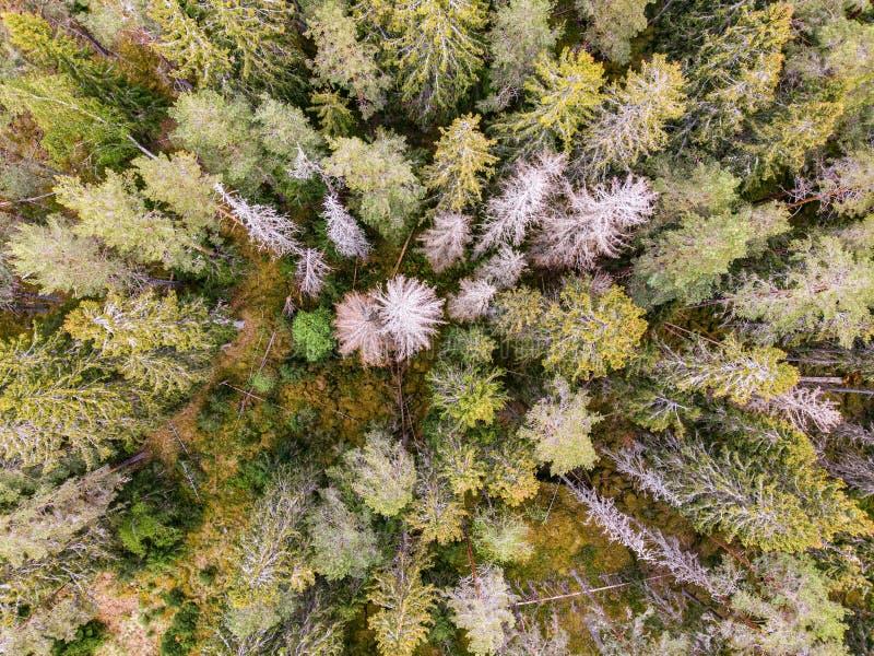 Bos landschap stock afbeelding