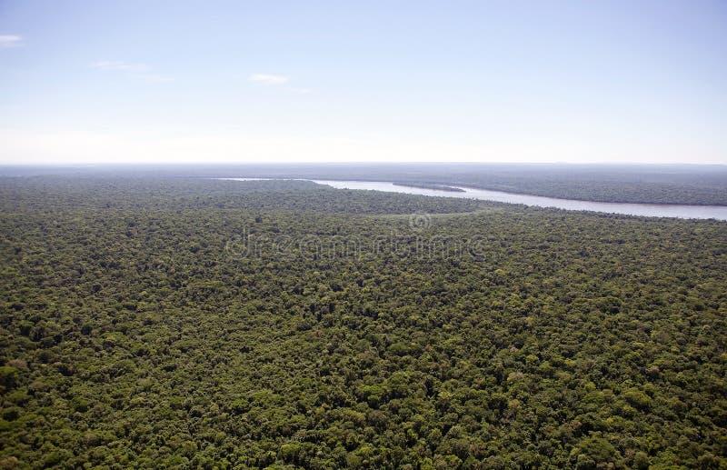 Bos langs de Iguazu-Rivier, Brazilië royalty-vrije stock foto