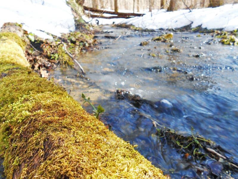 Bos lopende stroom in zonnige de lentedag stock afbeelding