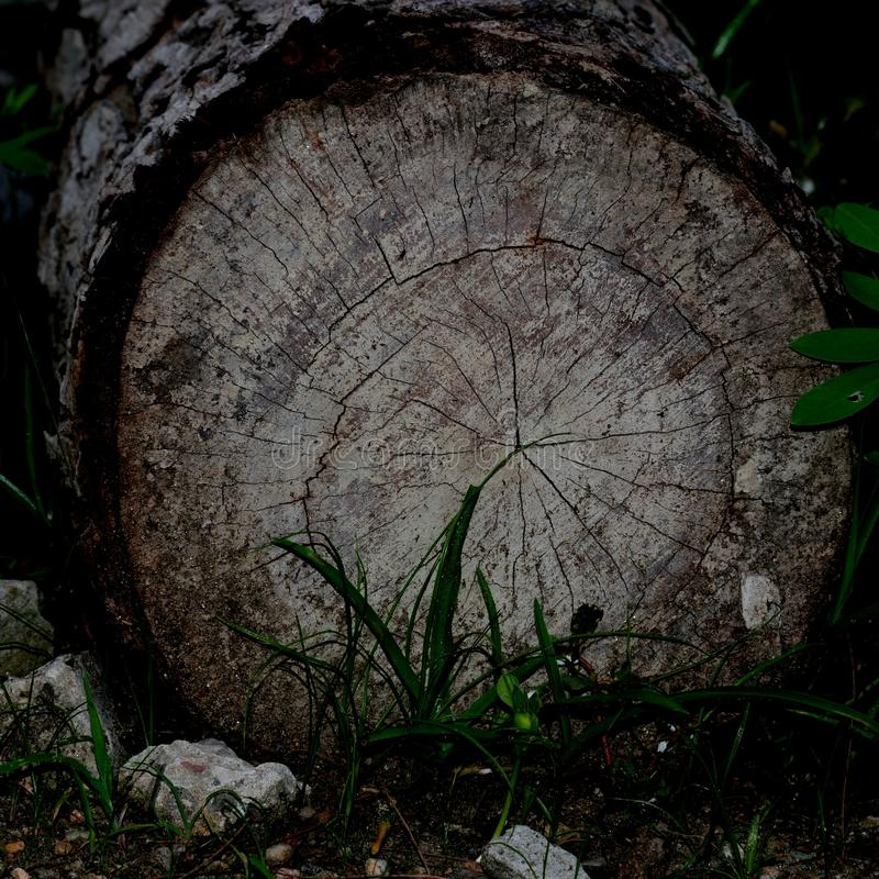 bos stock afbeelding