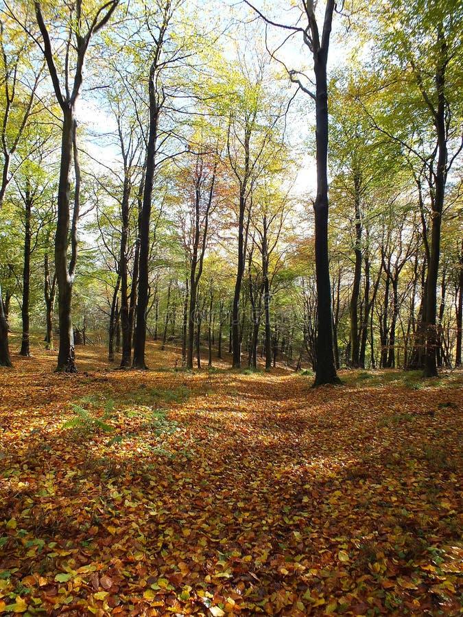 Bos met Autumn Leaves stock afbeeldingen