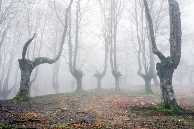 Bos met enge bomen royalty-vrije stock foto