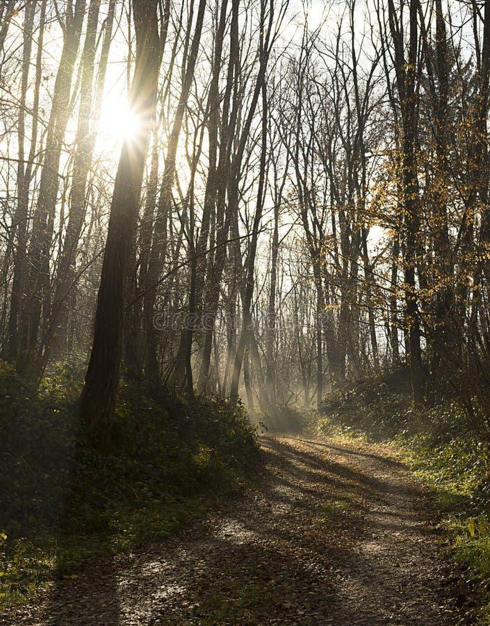 Bos met mist door zon wordt aangestoken die royalty-vrije stock foto