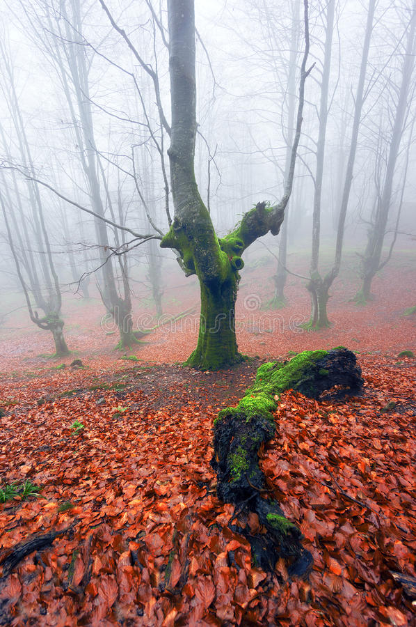 Bos met mist en boomstam ter plaatse stock afbeeldingen