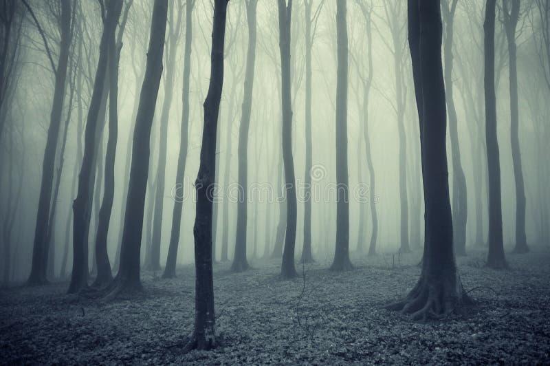 Bos met mist na regen stock foto