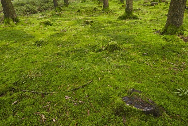 Bos met mos stock afbeeldingen