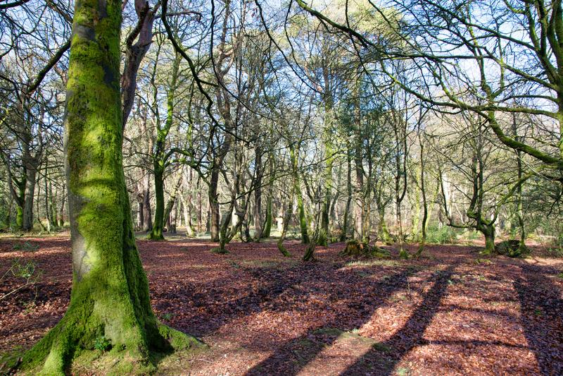 Bos met mos behandelde boom stock foto