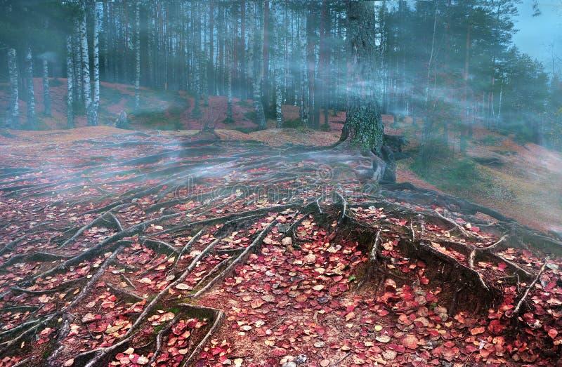 bos met rode de herfstbladeren op de grond royalty-vrije stock foto