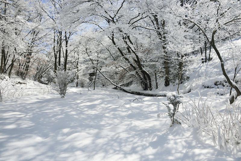Bos met sneeuw stock foto