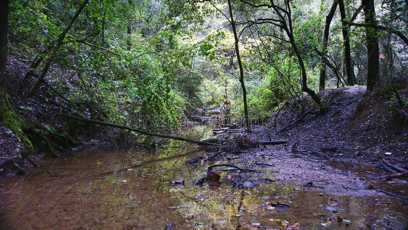 Bos met stroom in het Natuurreservaat van Collserola, Barcelona royalty-vrije stock afbeelding