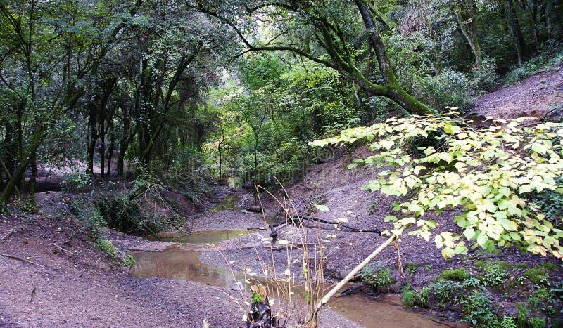 Bos met stroom in het Natuurreservaat van Collserola, Barcelona royalty-vrije stock foto