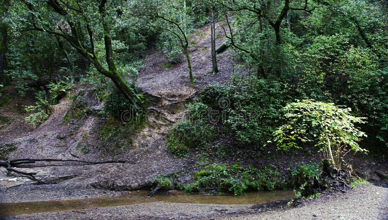 Bos met stroom in het Natuurreservaat van Collserola, Barcelona stock afbeeldingen
