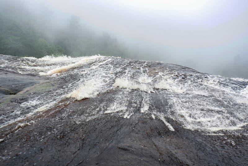 Bos met waterval stock foto's
