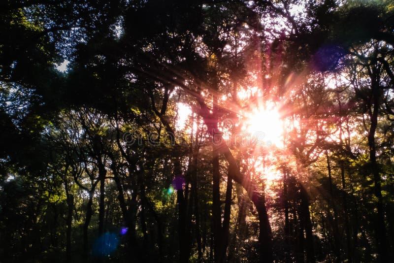 Bos met zon en lensgloed stock fotografie