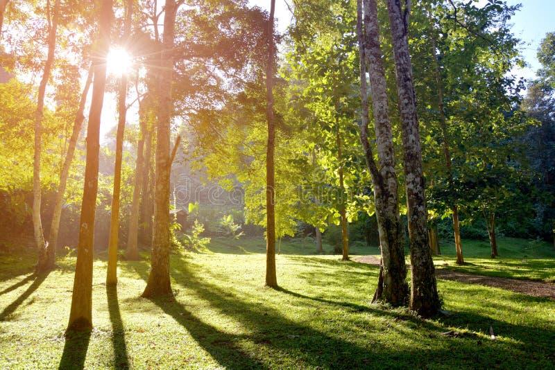 Bos met zonlicht, de zonstralen door takken van bomenblootstelling op gras royalty-vrije stock foto's