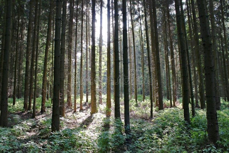 Bos met zonneschijn royalty-vrije stock foto