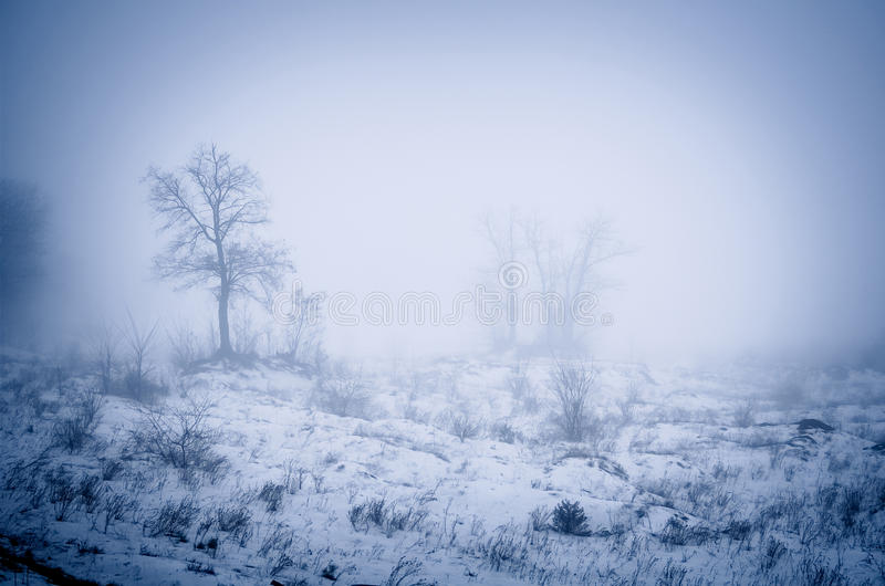 Bos in Mist royalty-vrije stock foto's