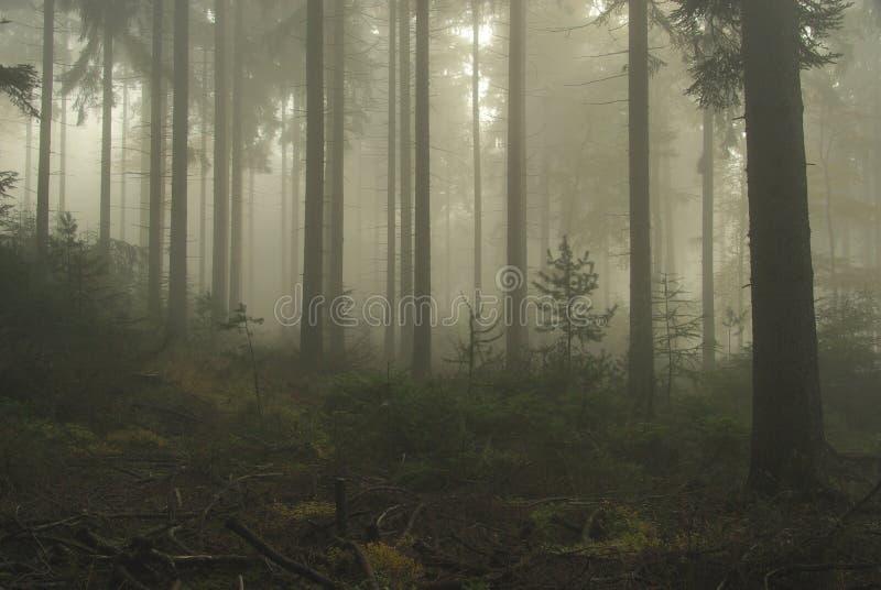 Bos in mist royalty-vrije stock afbeeldingen