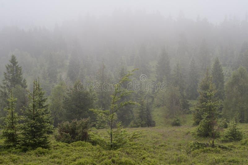 Bos in Mist - berg in Polen stock afbeeldingen