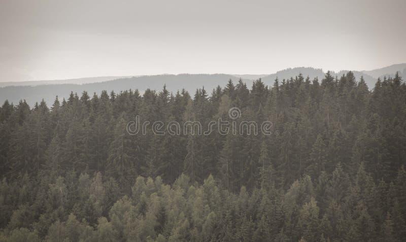 Bos in Mist De nostalgische wijnoogst ziet eruit stock foto