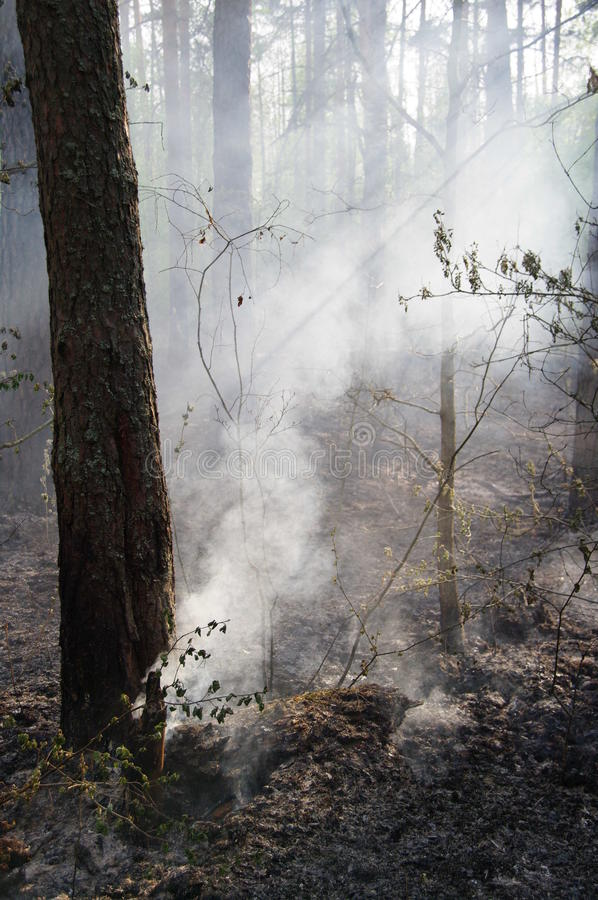 Bos na brand stock afbeelding