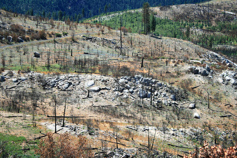 Bos na wilde brand, Nationaal Park Yosemite stock afbeelding