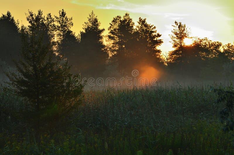 Bos onder het ochtendzonlicht, rode hemel royalty-vrije stock foto