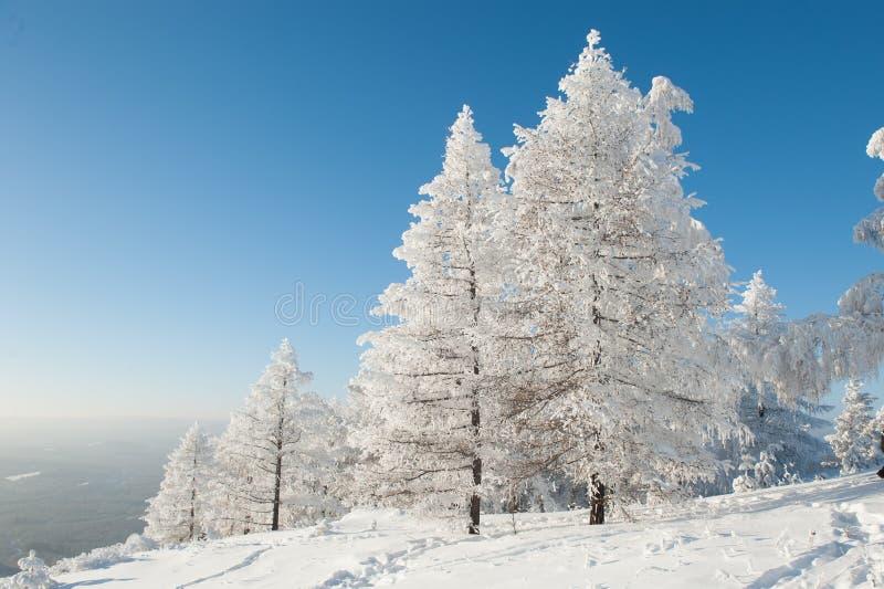 Bos onder zware sneeuw royalty-vrije stock afbeeldingen
