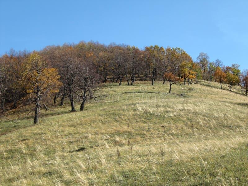 Bos op een heuvel. royalty-vrije stock foto