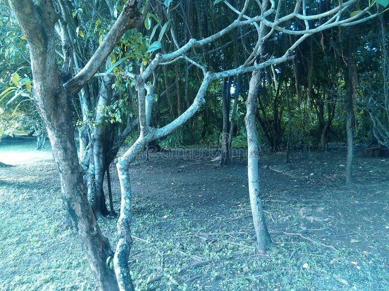 Bos Park stock afbeeldingen