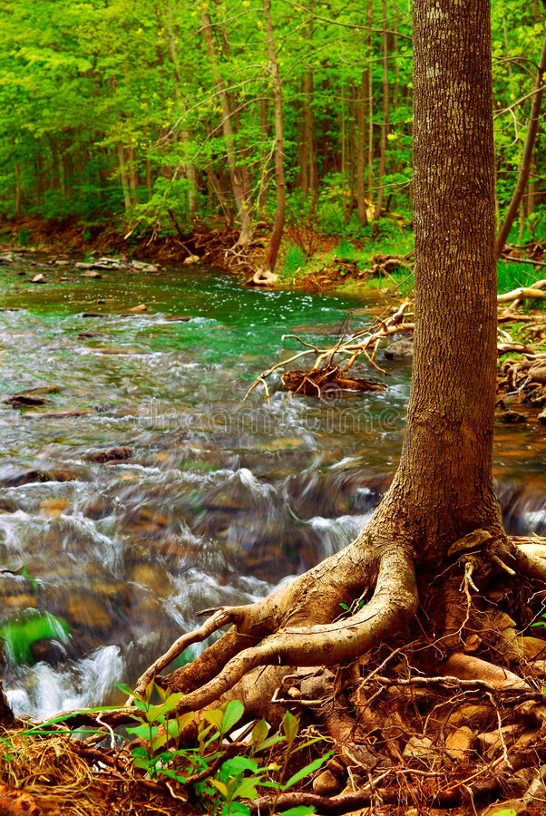 Bos rivier stock foto