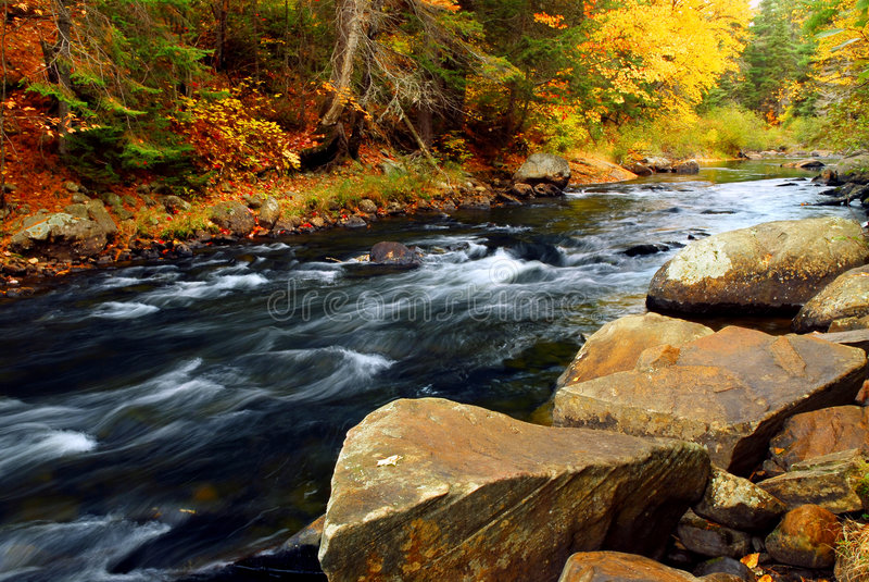 Bos rivier in de herfst royalty-vrije stock foto