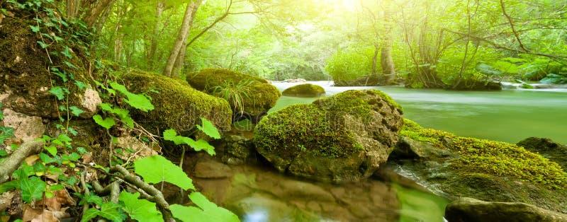 Bos rivier panoramisch landschap stock foto