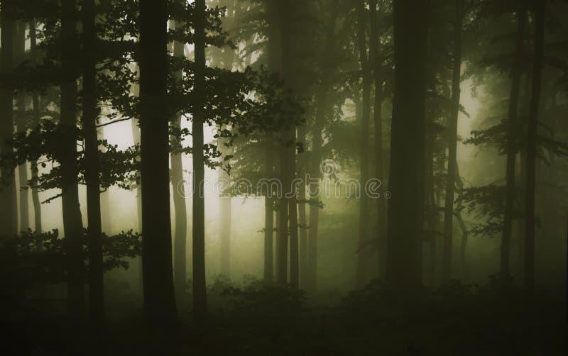 Bos scène op een regenachtige dag stock foto's