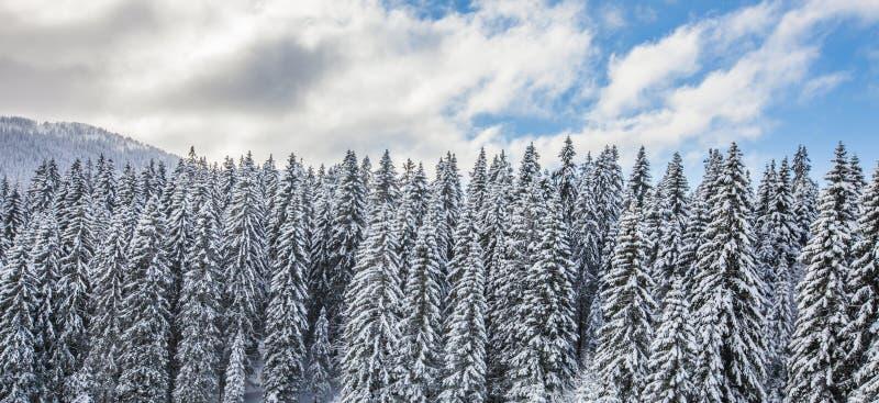 Bos Sneeuw III stock afbeeldingen