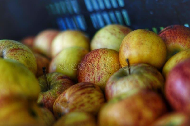 Bos van appelen stock fotografie