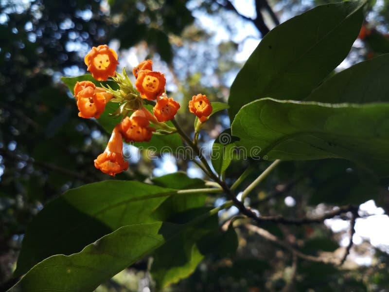 Bos van bloemen in oranje kleur royalty-vrije stock afbeeldingen
