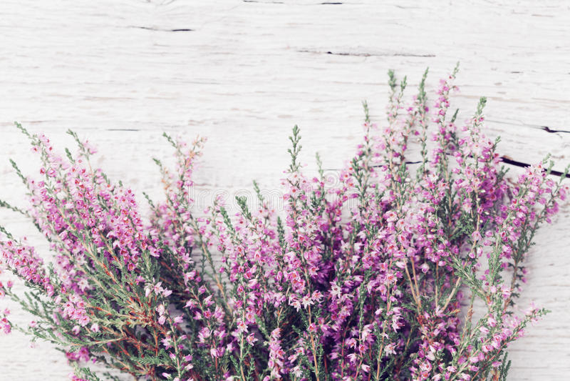 Bos van calluna van de heidebloem vulgaris, Erica, leng op de sjofele houten mening van de lijstbovenkant De kaart van de pastelk royalty-vrije stock afbeeldingen