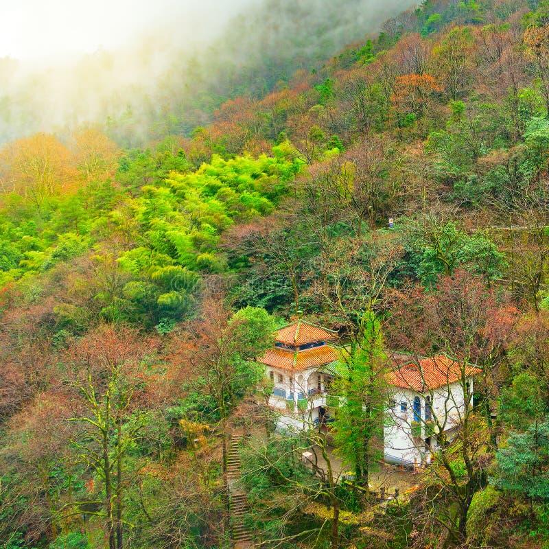 Bos van de de herfst het natte berg in het Nationale park van Huangshan royalty-vrije stock foto's