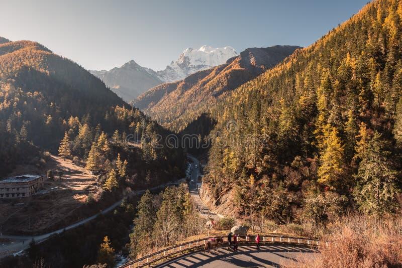 Bos van de landschaps het gouden pijnboom op bergketen in de herfst bij zonsondergang royalty-vrije stock fotografie